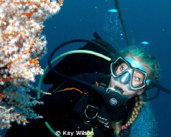 Diver and soft coral by Kay Wilson